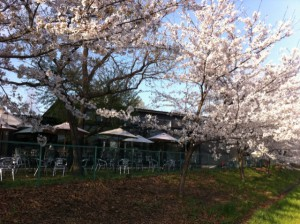 MT0412桜